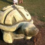 Várhelyi György: Teknős